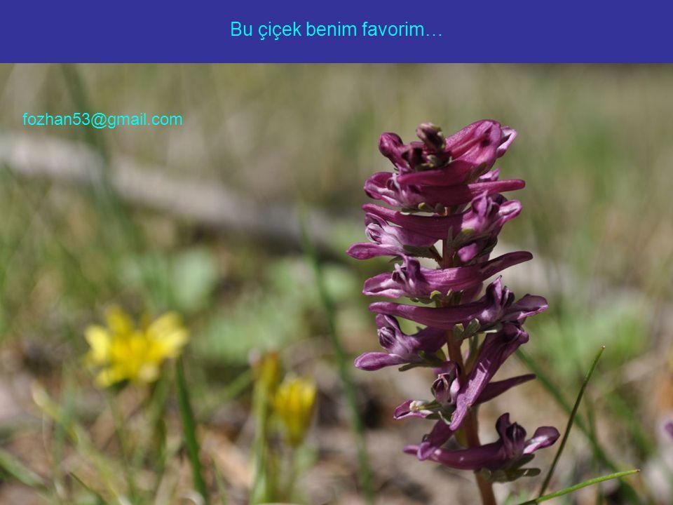 Bu çiçek benim favorim… fozhan53@gmail.com
