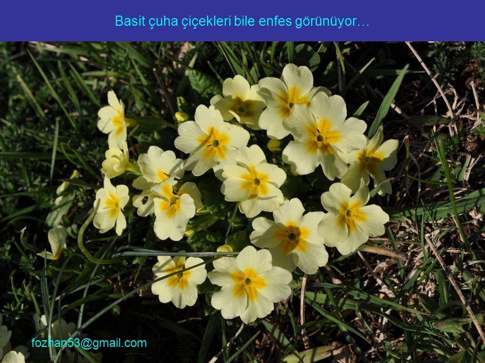 Basit çuha çiçekleri bile enfes görünüyor… fozhan53@gmail.com