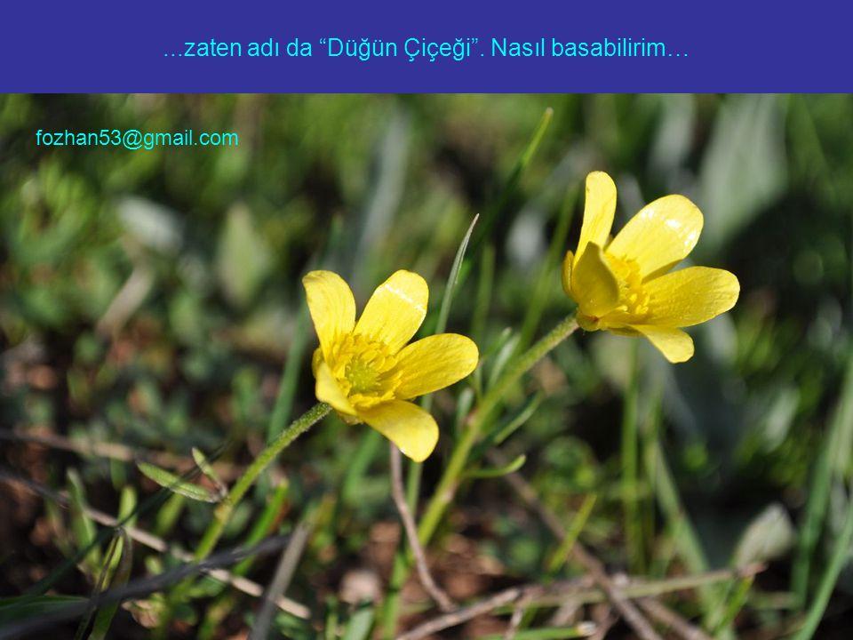 """...zaten adı da """"Düğün Çiçeği"""". Nasıl basabilirim… fozhan53@gmail.com"""