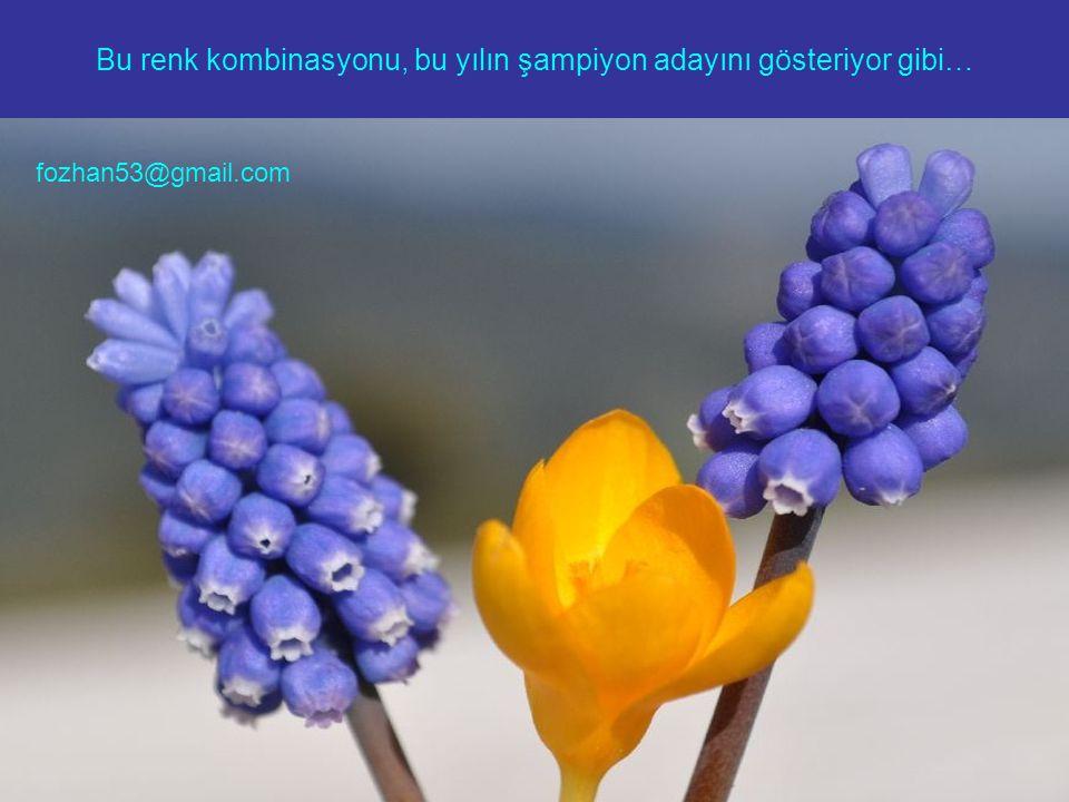 Bu renk kombinasyonu, bu yılın şampiyon adayını gösteriyor gibi… fozhan53@gmail.com