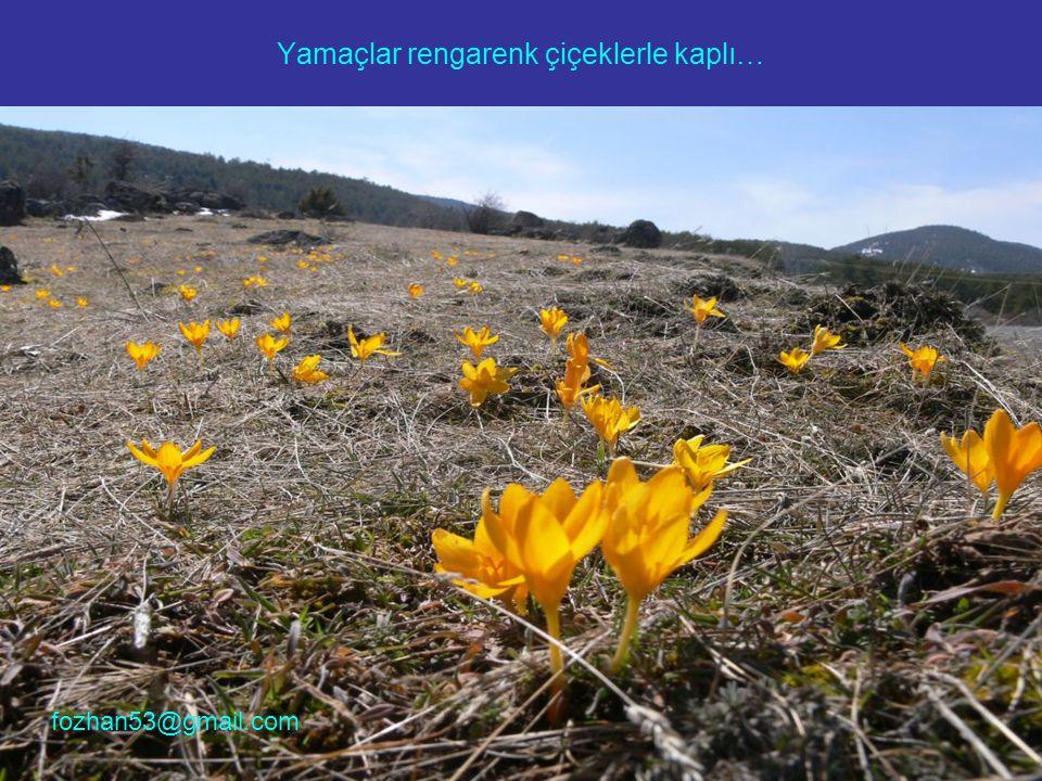 Yamaçlar rengarenk çiçeklerle kaplı… fozhan53@gmail.com