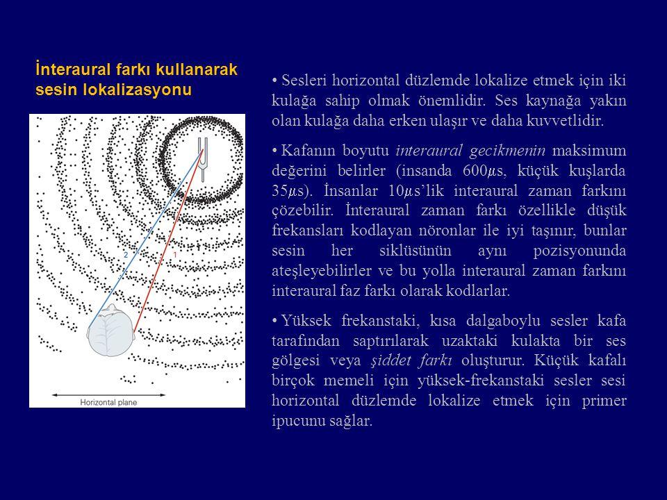 Spektral filtrelemeyi kullanarak sesin lokalizasyonu Spektral filtreleme ile geniş-bantlı sesler vertikal ve horizontal düzlemde lokalize edilebilir.