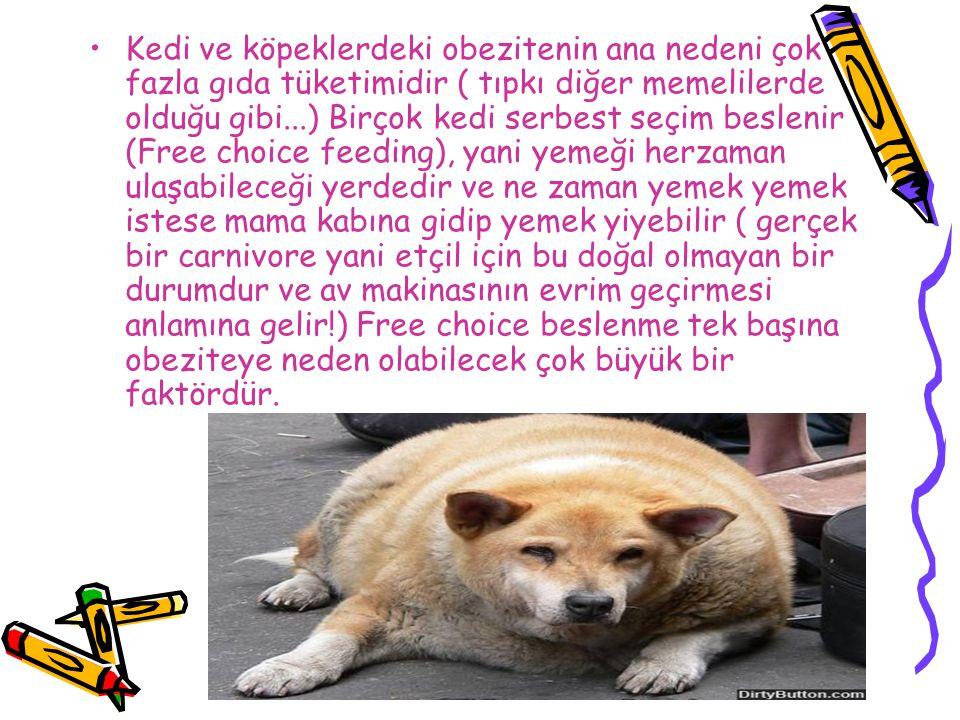 Kedi ve köpeklerdeki obezitenin ana nedeni çok fazla gıda tüketimidir ( tıpkı diğer memelilerde olduğu gibi...) Birçok kedi serbest seçim beslenir (Fr