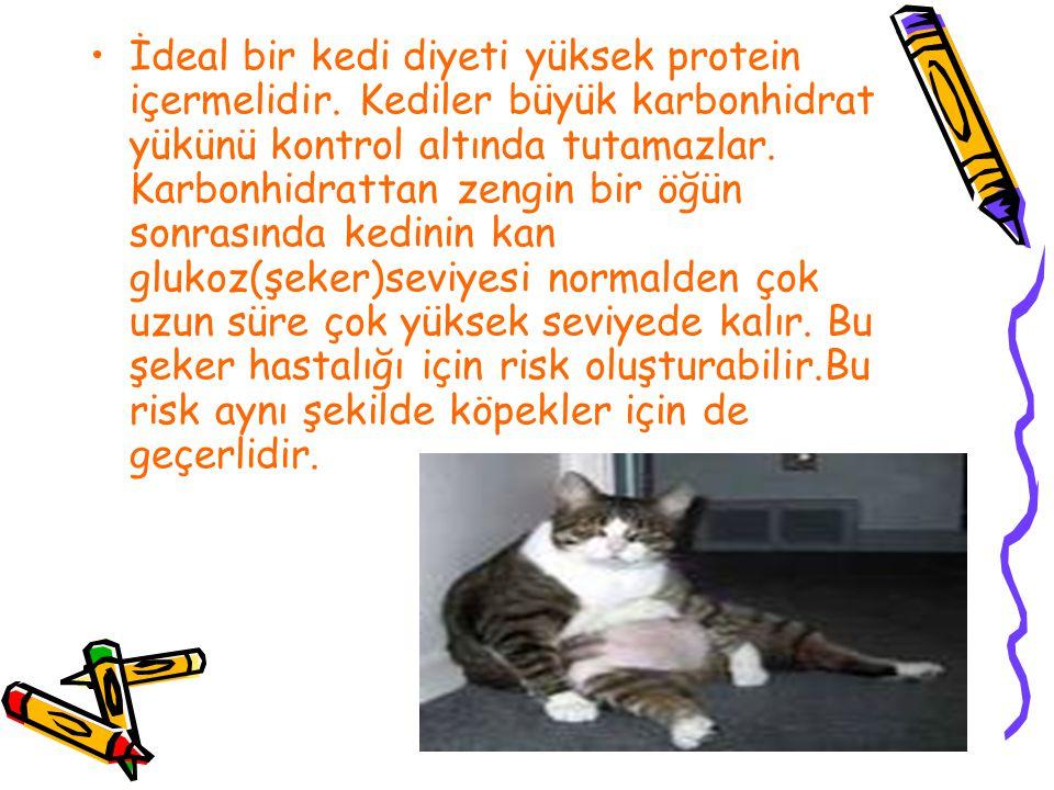 İdeal bir kedi diyeti yüksek protein içermelidir. Kediler büyük karbonhidrat yükünü kontrol altında tutamazlar. Karbonhidrattan zengin bir öğün sonras