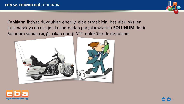 ATP FEN ve TEKNOLOJİ / SOLUNUM 3 ATP molekülü tüm canlı hücrelerde enerji kaynağı olup, bir hücreden başka bir hücreye aktarılamaz.