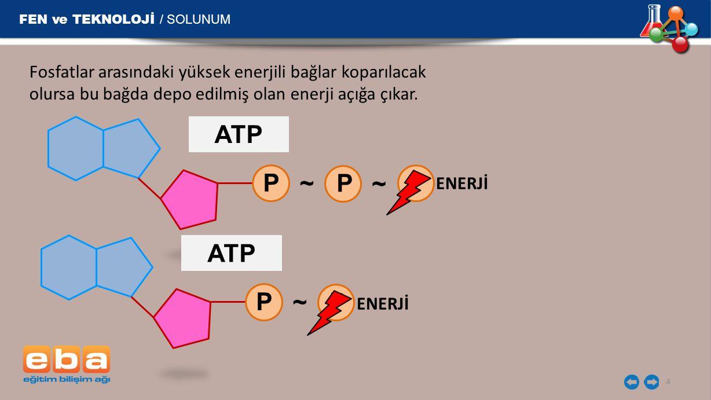 FEN ve TEKNOLOJİ / SOLUNUM 4 Fosfatlar arasındaki yüksek enerjili bağlar koparılacak olursa bu bağda depo edilmiş olan enerji açığa çıkar.