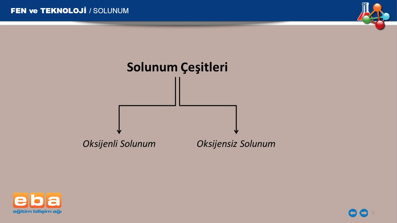 FEN ve TEKNOLOJİ / SOLUNUM 5 Solunum Çeşitleri Oksijensiz SolunumOksijenli Solunum