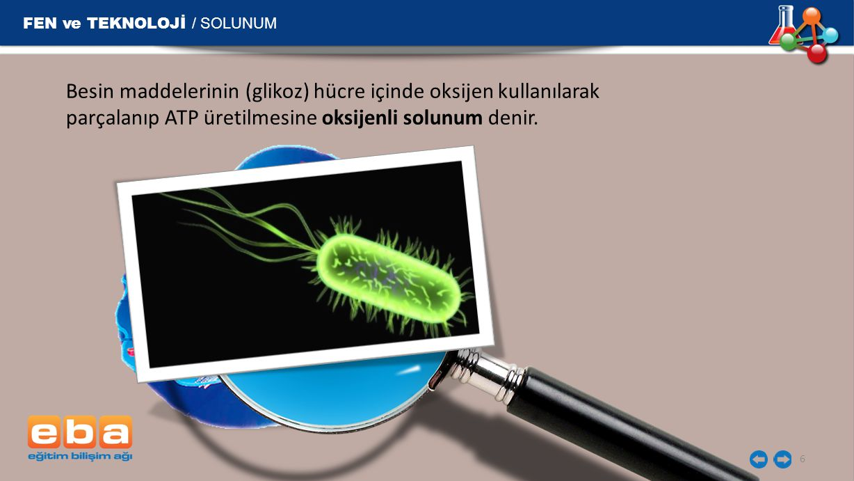 FEN ve TEKNOLOJİ / SOLUNUM 6 Besin maddelerinin (glikoz) hücre içinde oksijen kullanılarak parçalanıp ATP üretilmesine oksijenli solunum denir.