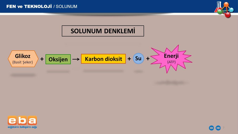 FEN ve TEKNOLOJİ / SOLUNUM 7 Glikoz (Basit Şeker) Karbon dioksit Su + Oksijen + + Enerji (ATP) SOLUNUM DENKLEMİ
