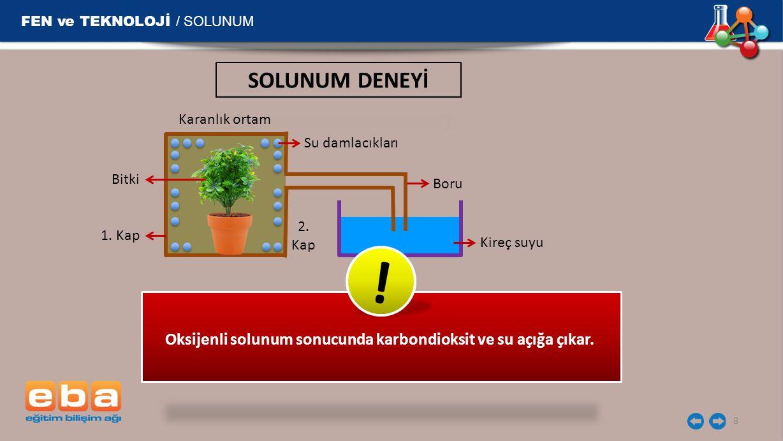 2. Kap Boru Karanlık ortam 1. Kap Bitki Su damlacıkları Kireç suyu FEN ve TEKNOLOJİ / SOLUNUM 8 Oksijenli solunum sonucunda karbondioksit ve su açığa