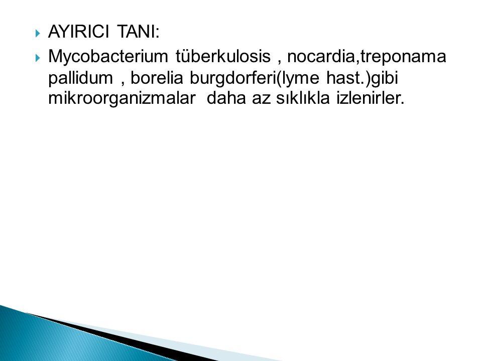  AYIRICI TANI:  Mycobacterium tüberkulosis, nocardia,treponama pallidum, borelia burgdorferi(lyme hast.)gibi mikroorganizmalar daha az sıklıkla izle
