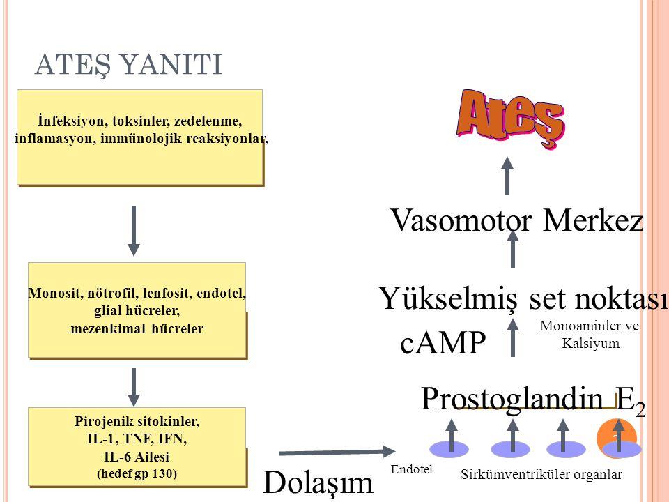ATEŞ YANITI 7 İnfeksiyon, toksinler, zedelenme, inflamasyon, immünolojik reaksiyonlar, Monosit, nötrofil, lenfosit, endotel, glial hücreler, mezenkima