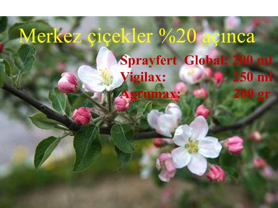 Merkez çiçekler %20 açınca Sprayfert Global: 200 ml Vigilax: 250 ml Agrumax: 200 gr