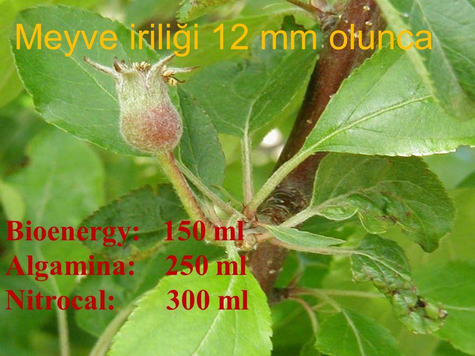 Meyve iriliği 12 mm olunca Bioenergy: 150 ml Algamina: 250 ml Nitrocal: 300 ml