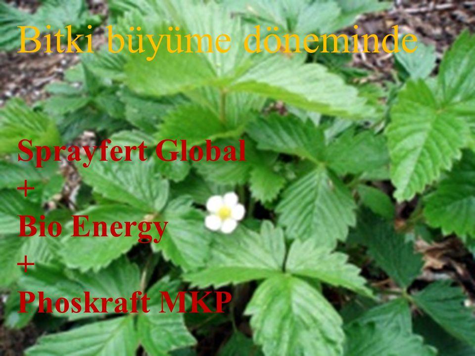 Bitki büyüme döneminde Sprayfert Global + Bio Energy + Phoskraft MKP