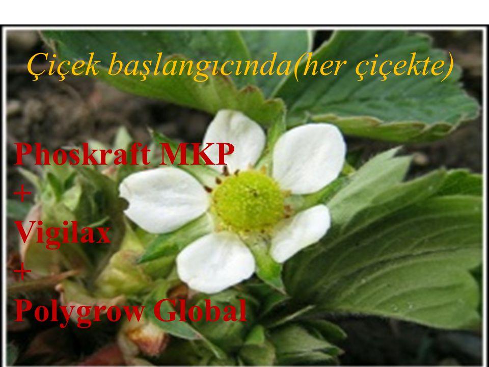 Phoskraft MKP + Vigilax + Polygrow Global Çiçek başlangıcında(her çiçekte)