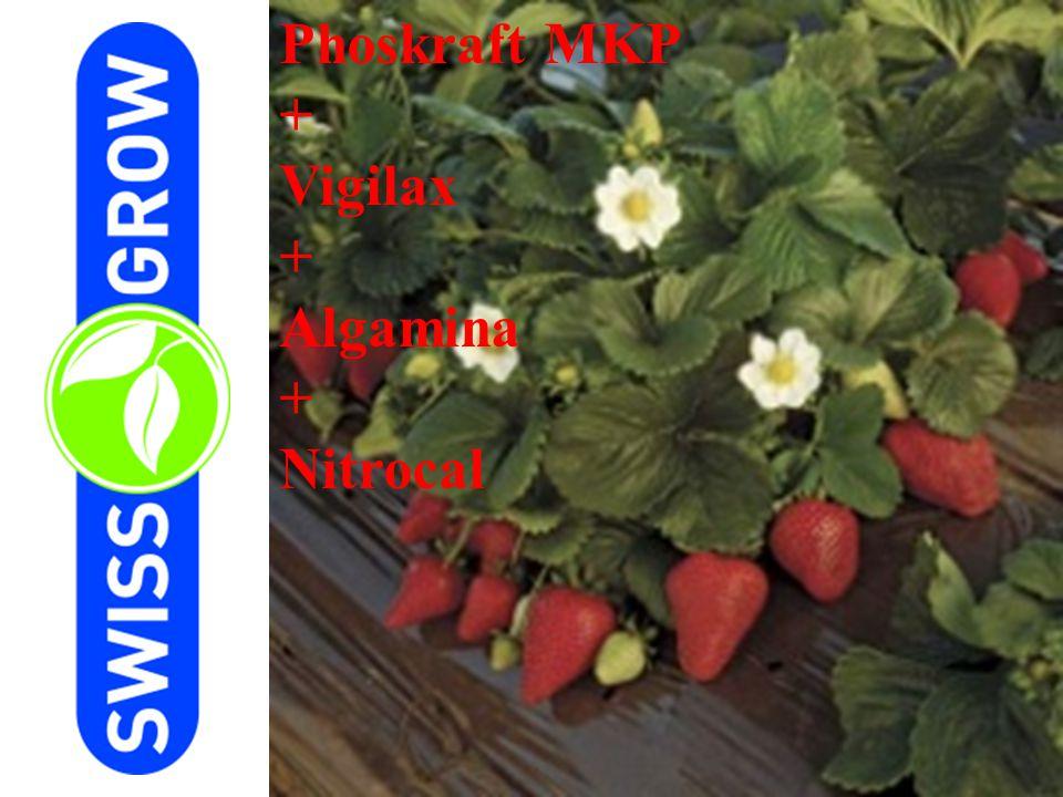 Phoskraft MKP + Vigilax + Algamina + Nitrocal
