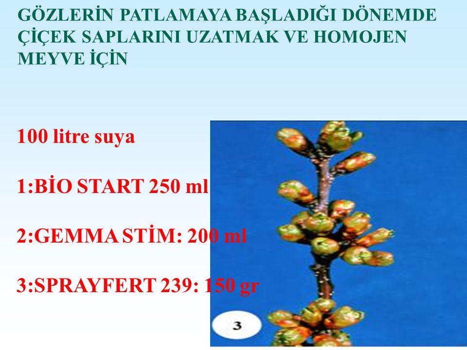 ERKEN BEYAZ TOMURCUK DÖNEMDE Çiçek saplarını uzatmak ve hızlı çiçeklenme için 100 litre Suya 1:BETABOR 250 Ml