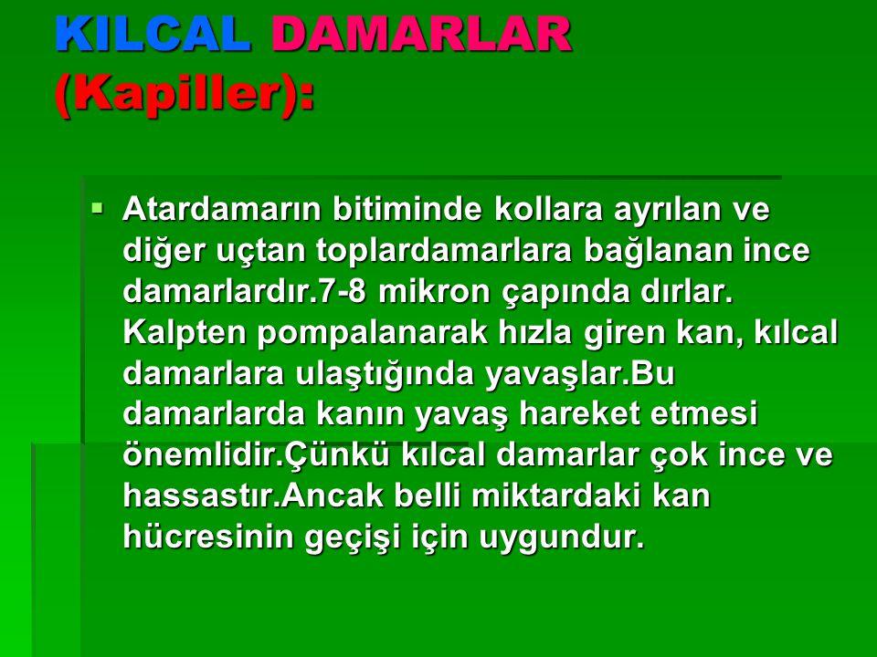 KILCAL DAMARLAR (Kapiller):  Atardamarın bitiminde kollara ayrılan ve diğer uçtan toplardamarlara bağlanan ince damarlardır.7-8 mikron çapında dırlar