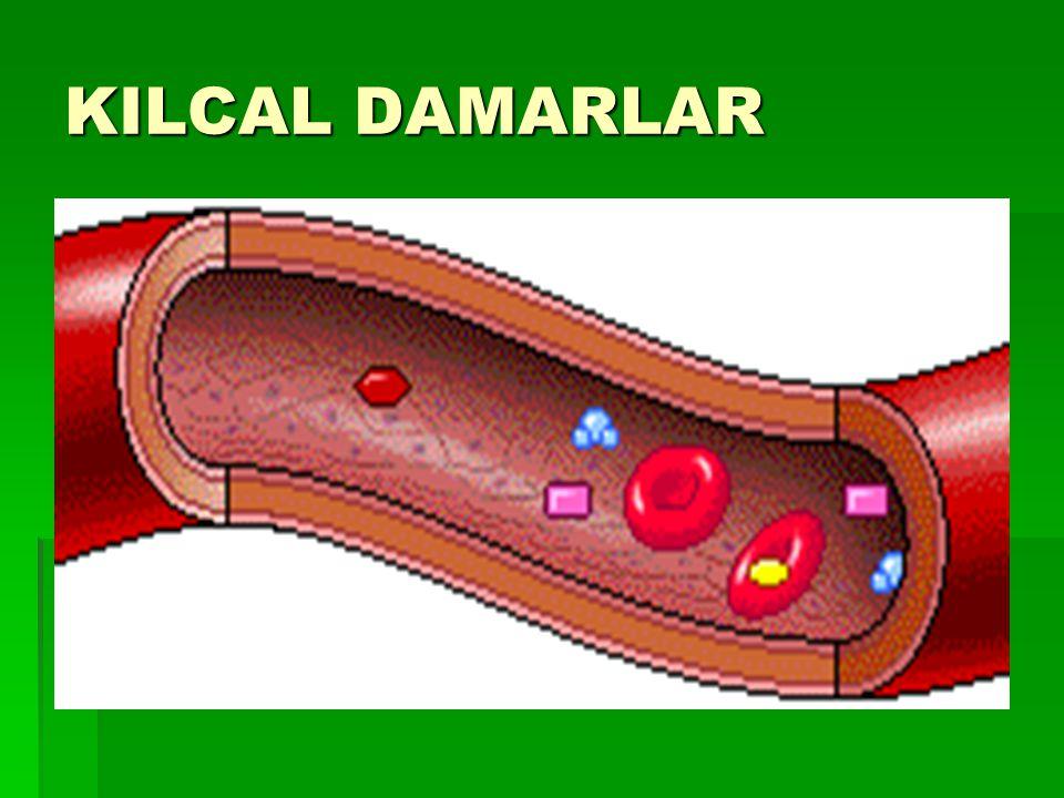 KILCAL DAMARLAR