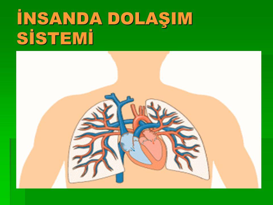 Her kalp atışında kan ilk olarak kulakçıklar tarafından karıncıklara pompalanır.