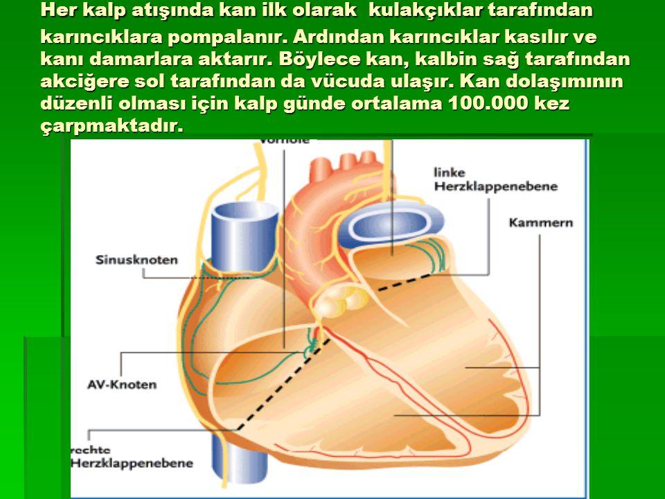 Her kalp atışında kan ilk olarak kulakçıklar tarafından karıncıklara pompalanır. Ardından karıncıklar kasılır ve kanı damarlara aktarır. Böylece kan,