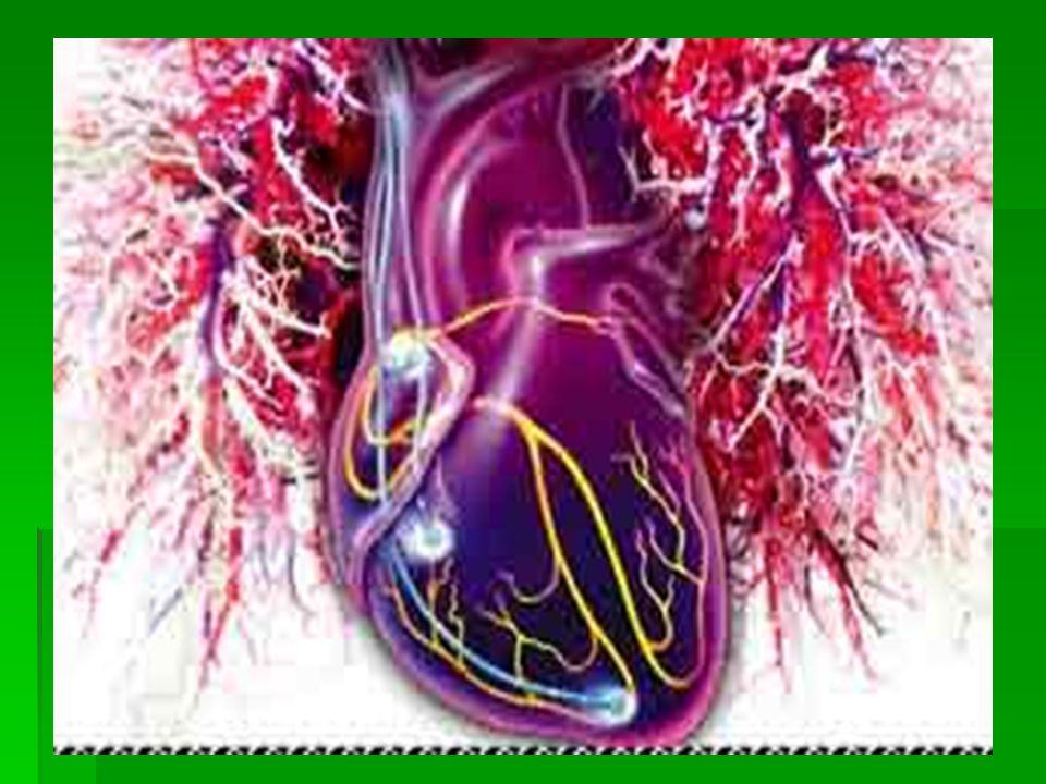 KALBİN ARTERLERİ VE VENLERİ  Kalbin arterlerine KORONER ARTERLER denir.