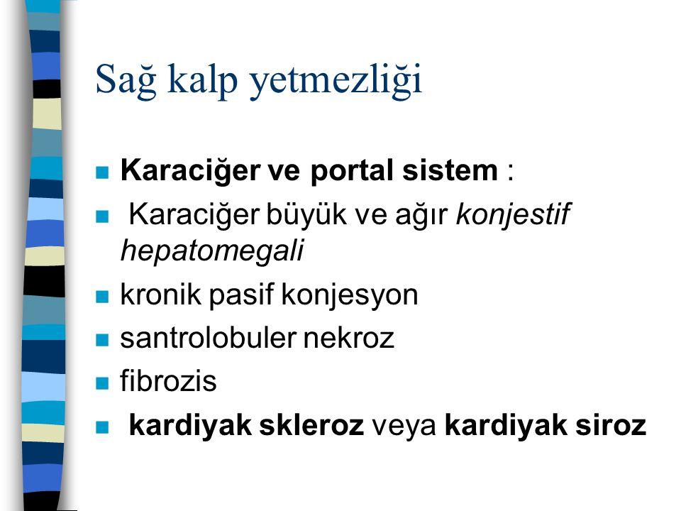 Sağ kalp yetmezliği n Karaciğer ve portal sistem : n Karaciğer büyük ve ağır konjestif hepatomegali n kronik pasif konjesyon n santrolobuler nekroz n