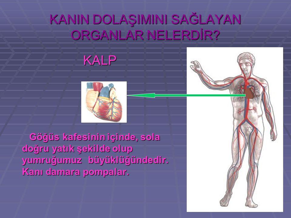 DOLAŞIM SİSTEMİ NEDİR?  İ nsan vücudundaki işlemlerin çok büyük bir bölümü, dolaşım sisteminin birbiriyle bağlantılı ve son derece karmaşık yapısı sa
