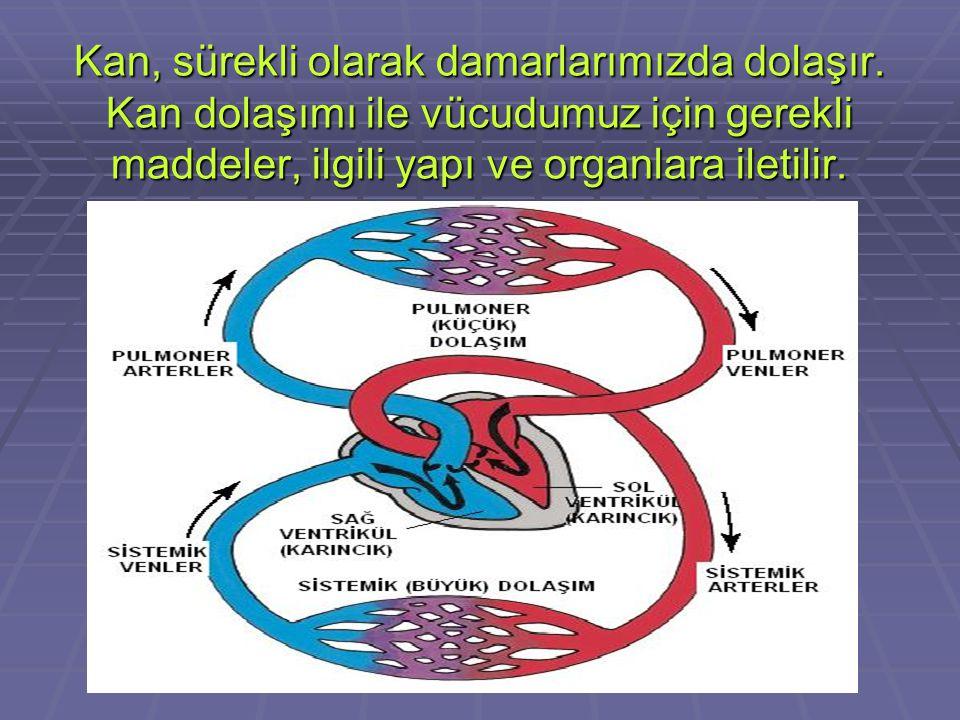 KANIN DOLAŞIMINI SAĞLAYAN ORGANLAR DAMARLAR DAMARLAR Vücudun tüm yapılarına ulaşım sağlayan borulardır. Kanı, ilgili yapılara; oradan da kalbe taşır.