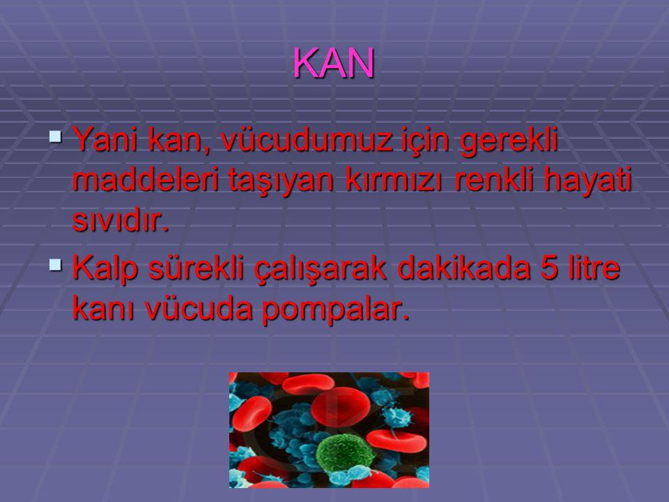 KAN NEDİR ?  Kan, atardamar, toplardamar ve kılcal damarlardan oluşan damar ağının içinde dolaşan; akıcı plazma ve hücrelerden (alyuvar,akyuvar ve pl