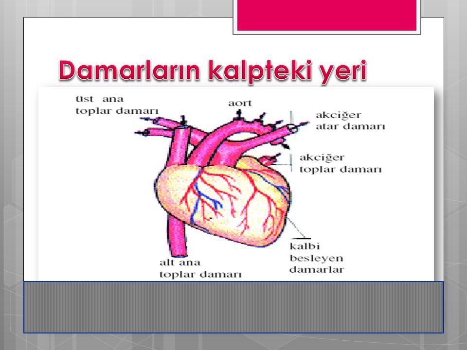 Kılcal damar  Kılcal damar veya kapiler vücuttaki en küçük kan damarlarına verilen isimdir.