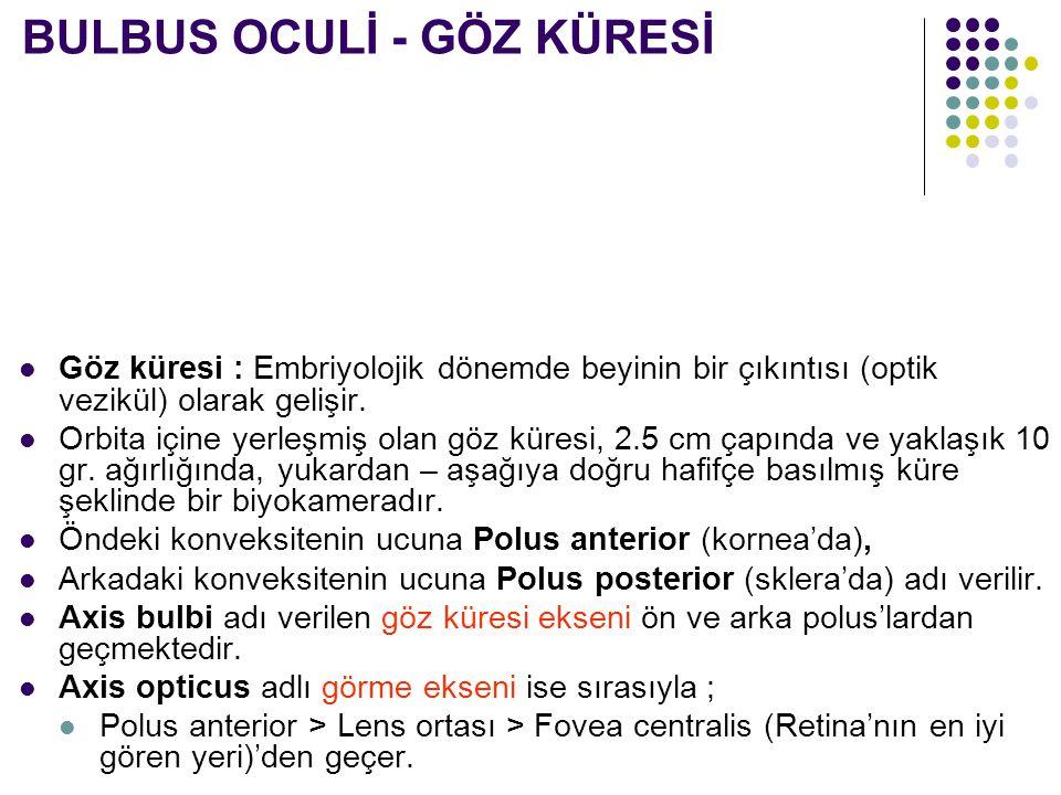 Discus nervi optici BULBUS OCULİ - EKSENLER DIŞ YAN İÇ YAN Fovea centralis Axis opticus Axis bulbi 2 eksenin kesişim yeri Polus posterior lentis Polus anterior bulbis Polus posterior bulbis