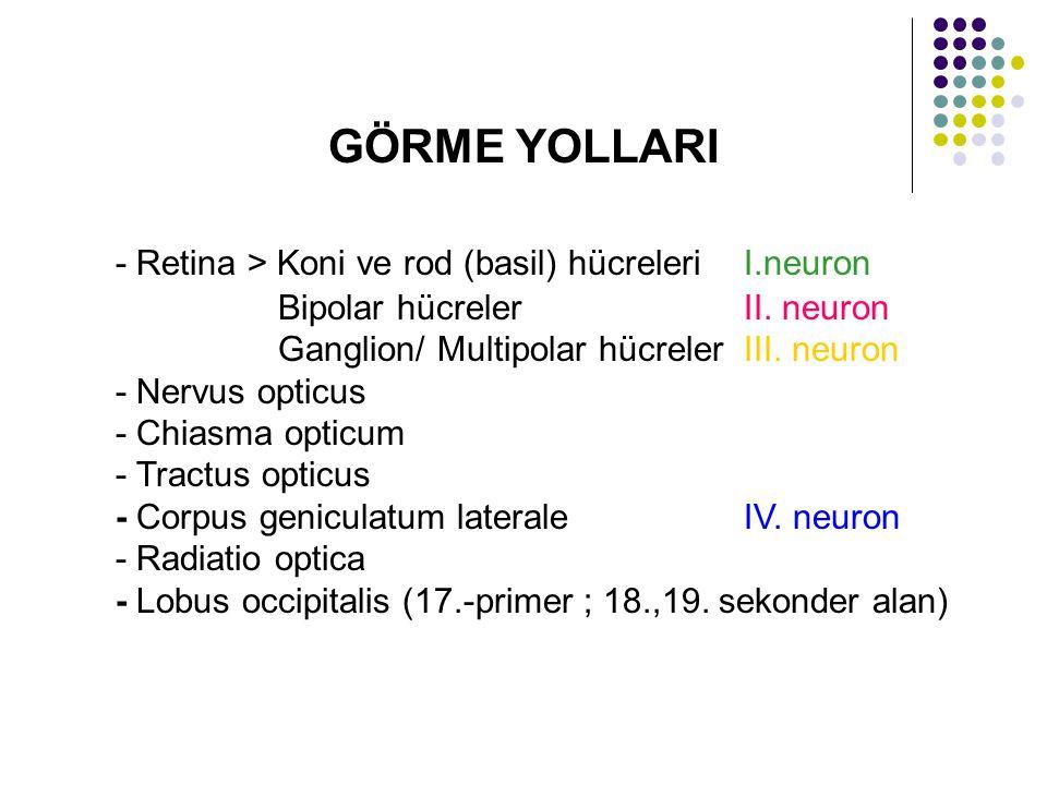 GÖRME YOLLARI - Retina > Koni ve rod (basil) hücreleriI.neuron Bipolar hücrelerII. neuron Ganglion/ Multipolar hücrelerIII. neuron - Nervus opticus -