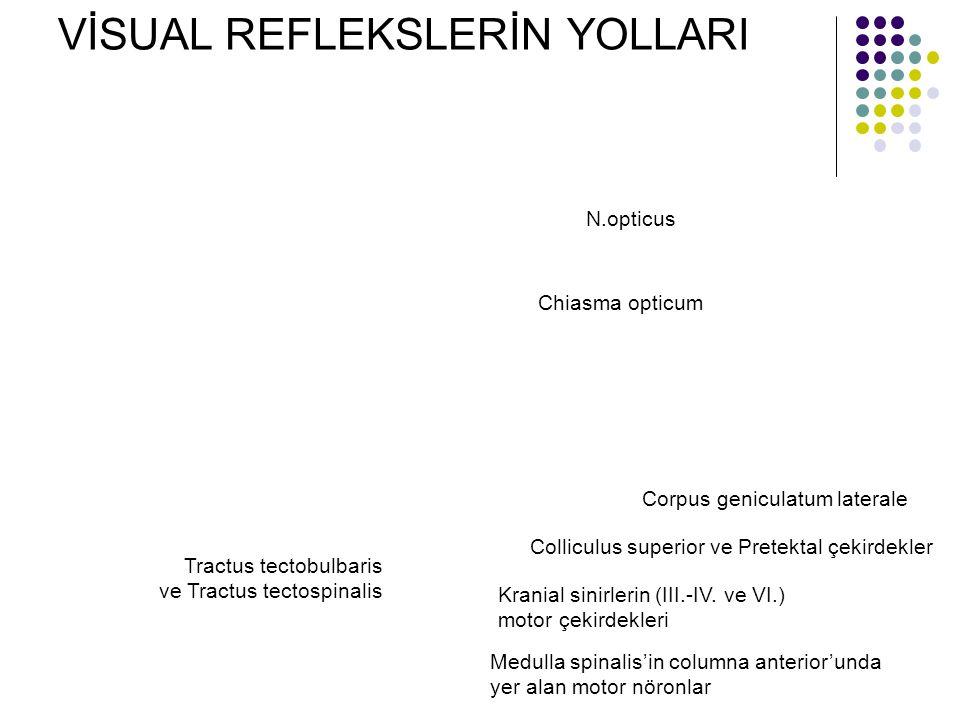 VİSUAL REFLEKSLERİN YOLLARI N.opticus Chiasma opticum Corpus geniculatum laterale Colliculus superior ve Pretektal çekirdekler Kranial sinirlerin (III