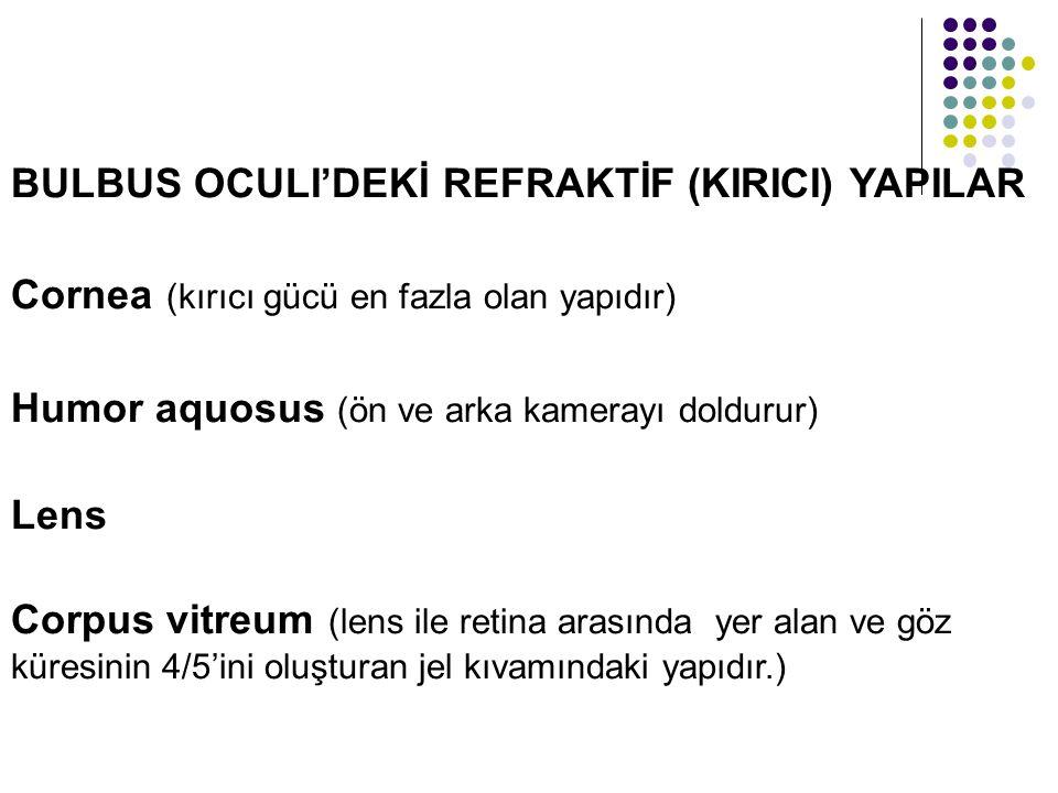BULBUS OCULI'DEKİ REFRAKTİF (KIRICI) YAPILAR Cornea (kırıcı gücü en fazla olan yapıdır) Humor aquosus (ön ve arka kamerayı doldurur) Lens Corpus vitre