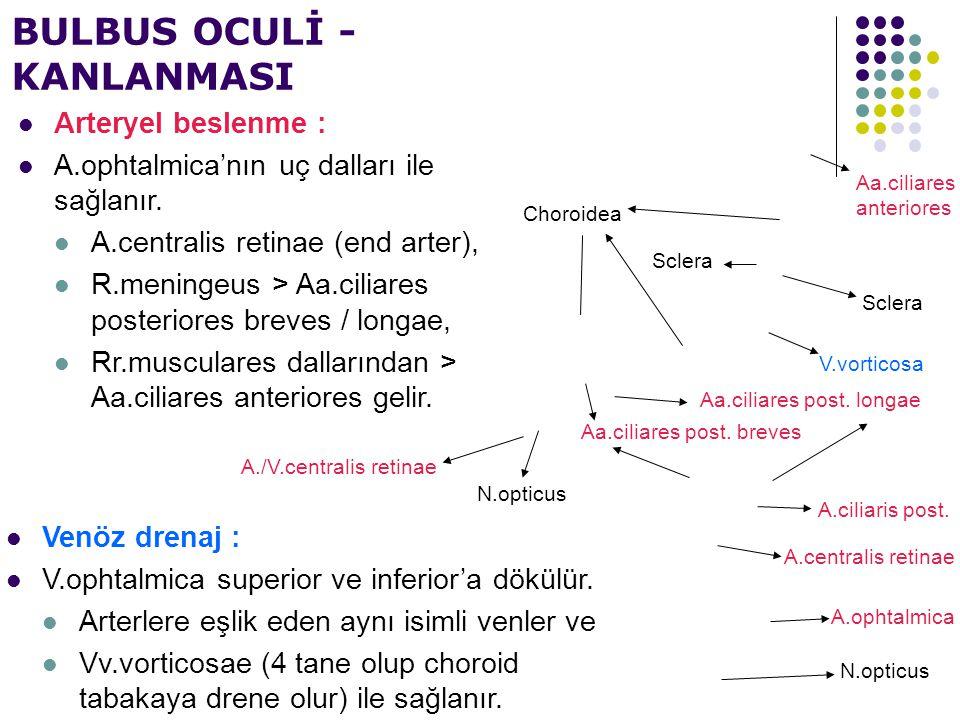 A./V.centralis retinae V.vorticosa Sclera Choroidea Aa.ciliares post. longae N.opticus Aa.ciliares anteriores BULBUS OCULİ - KANLANMASI Arteryel besle