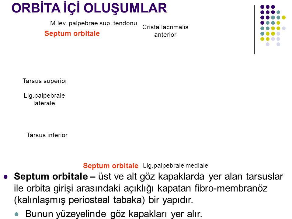 M.lev. palpebrae sup. tendonu Septum orbitale Crista lacrimalis anterior Tarsus superior Lig.palpebrale laterale Tarsus inferior Septum orbitale Lig.p