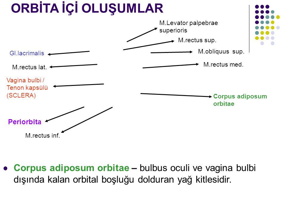 Gl.lacrimalis Corpus adiposum orbitae Periorbita M.Levator palpebrae superioris M.rectus sup. M.obliquus sup. M.rectus med. M.rectus lat. M.rectus inf