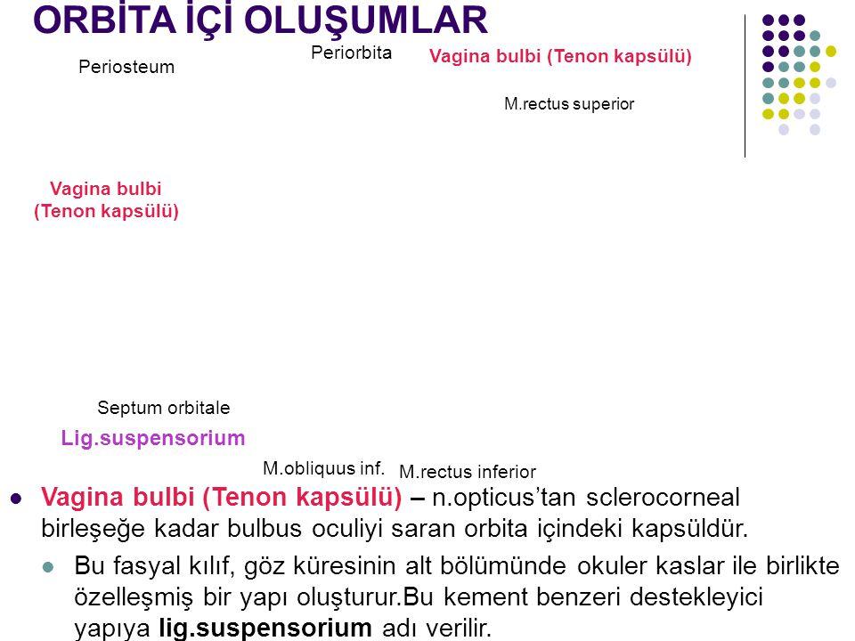 Periosteum Periorbita Vagina bulbi (Tenon kapsülü) M.rectus superior M.rectus inferior Septum orbitale Lig.suspensorium ORBİTA İÇİ OLUŞUMLAR M.obliquu