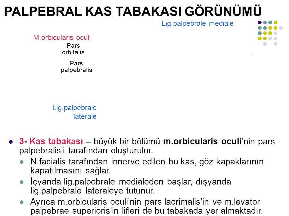 M.orbicularis oculi Pars orbitalis Pars palpebralis Lig.palpebrale mediale Lig.palpebrale laterale PALPEBRAL KAS TABAKASI GÖRÜNÜMÜ 3- Kas tabakası – b