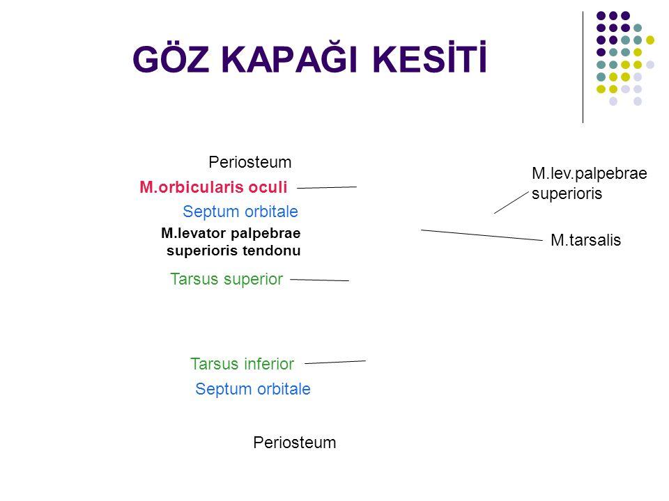 GÖZ KAPAĞI KESİTİ Periosteum Septum orbitale M.levator palpebrae superioris tendonu Periosteum Septum orbitale M.orbicularis oculi M.lev.palpebrae sup