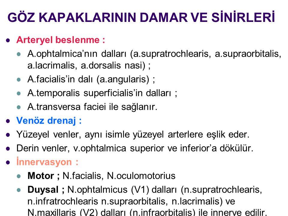GÖZ KAPAKLARININ DAMAR VE SİNİRLERİ Arteryel beslenme : A.ophtalmica'nın dalları (a.supratrochlearis, a.supraorbitalis, a.lacrimalis, a.dorsalis nasi)