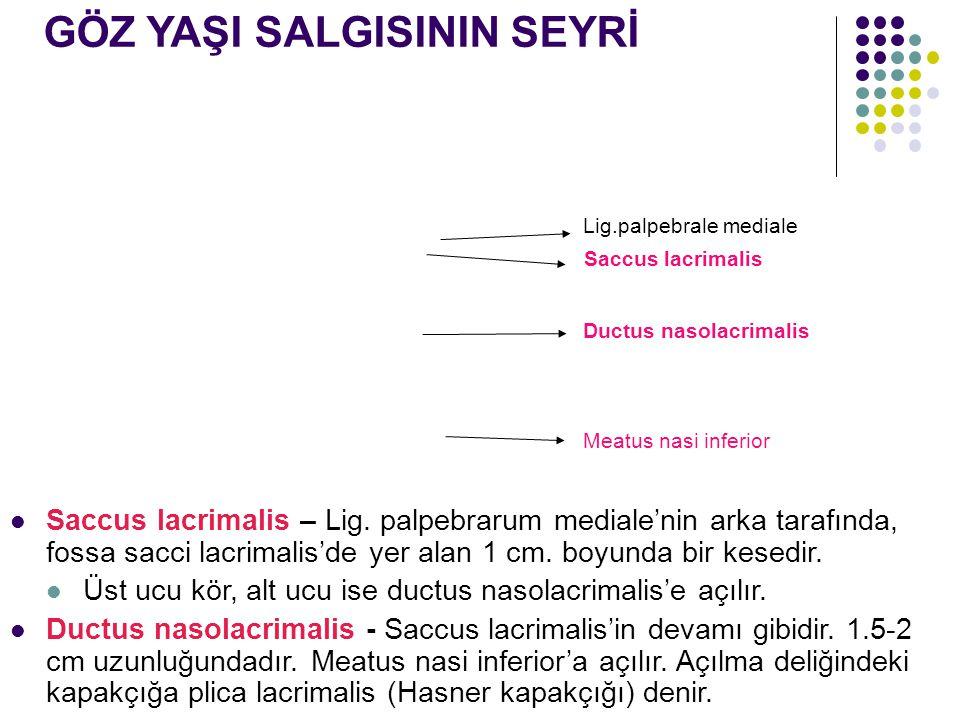 GÖZ YAŞI SALGISININ SEYRİ Saccus lacrimalis – Lig. palpebrarum mediale'nin arka tarafında, fossa sacci lacrimalis'de yer alan 1 cm. boyunda bir kesedi