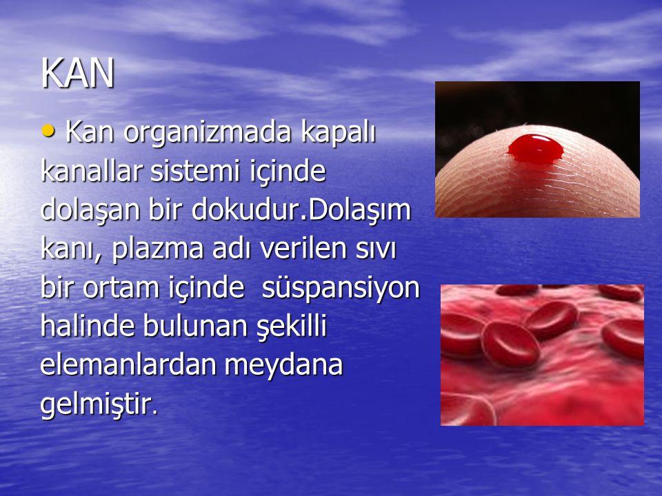 KAN Kan organizmada kapalı Kan organizmada kapalı kanallar sistemi içinde dolaşan bir dokudur.Dolaşım kanı, plazma adı verilen sıvı bir ortam içinde süspansiyon halinde bulunan şekilli elemanlardan meydana gelmiştir.