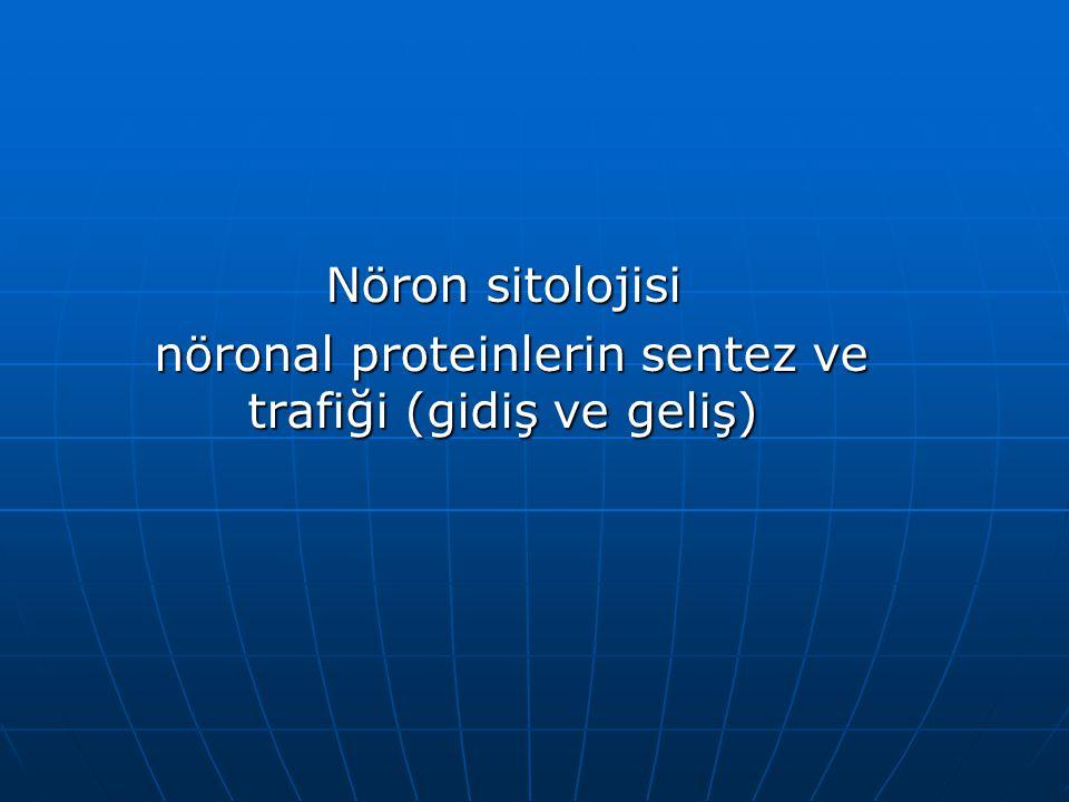 Nöron sitolojisi nöronal proteinlerin sentez ve trafiği (gidiş ve geliş) nöronal proteinlerin sentez ve trafiği (gidiş ve geliş)