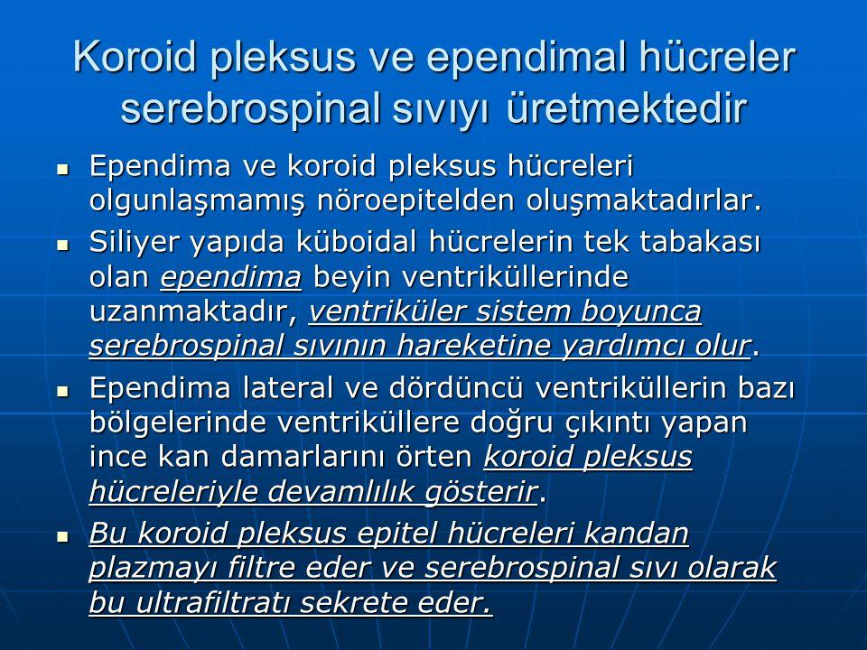 Koroid pleksus ve ependimal hücreler serebrospinal sıvıyı üretmektedir Ependima ve koroid pleksus hücreleri olgunlaşmamış nöroepitelden oluşmaktadırlar.