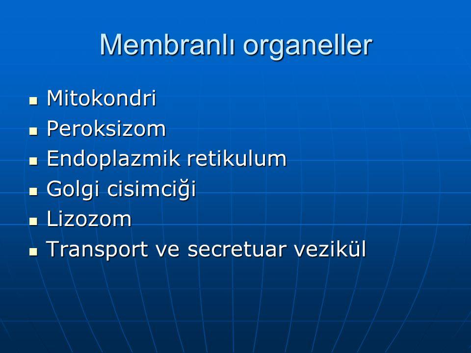 Membranlı organeller Mitokondri Mitokondri Peroksizom Peroksizom Endoplazmik retikulum Endoplazmik retikulum Golgi cisimciği Golgi cisimciği Lizozom Lizozom Transport ve secretuar vezikül Transport ve secretuar vezikül