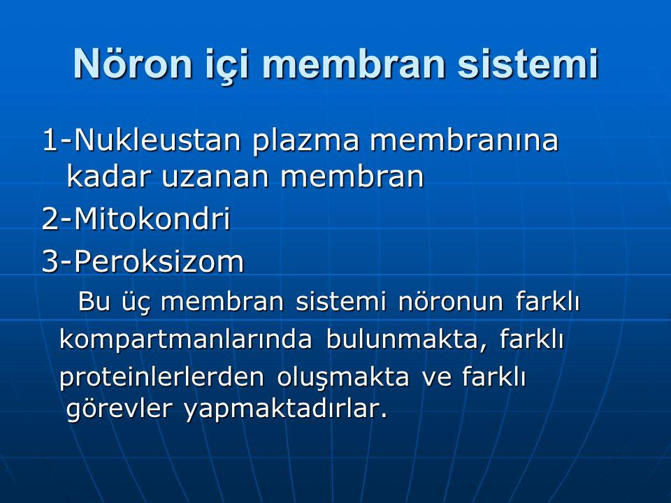 Nöron içi membran sistemi 1-Nukleustan plazma membranına kadar uzanan membran 2-Mitokondri3-Peroksizom Bu üç membran sistemi nöronun farklı Bu üç membran sistemi nöronun farklı kompartmanlarında bulunmakta, farklı kompartmanlarında bulunmakta, farklı proteinlerlerden oluşmakta ve farklı görevler yapmaktadırlar.