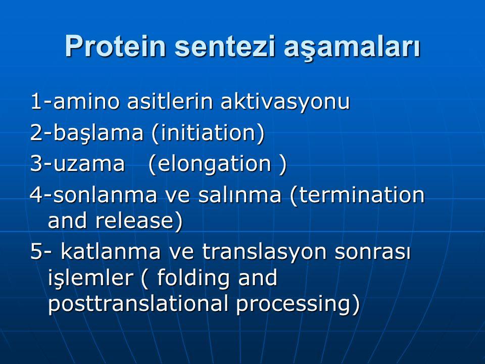 Protein sentezi aşamaları 1-amino asitlerin aktivasyonu 2-başlama (initiation) 3-uzama (elongation ) 4-sonlanma ve salınma (termination and release) 5- katlanma ve translasyon sonrası işlemler ( folding and posttranslational processing)